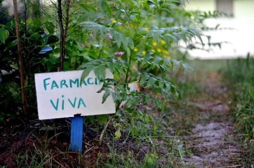 Canteiro de ervas medicinais